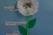 Life Cycle of a plant/flower / by Katina Maniscalco-Smith