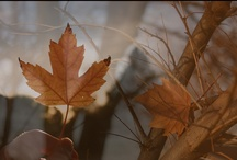 autumn lovelies
