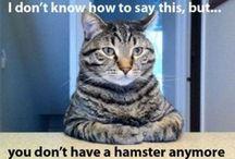 Cat Humor & Humorous Cats
