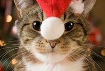 Cat`s Christmas