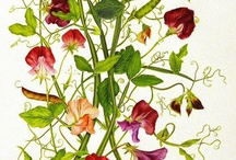 Art:Botanical & Science