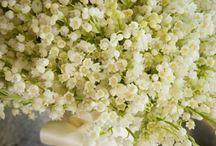 Muguet / Flowers