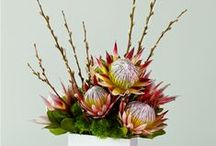 Corporate Flowers / Flower ideas for work