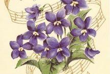 Violets / Old fashion flowers