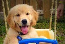 Ray Palmer / Ray Palmer on Arrow looks like a happy golden retriever puppy.