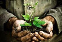 Gardening / by Deborah Swanson