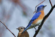 Bluebirds, a novel / by Kim Jorgensen Gane