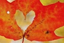 Fall Fun  / Get into the Fall spirit with some of our favorite fall things! / by REEDS Jewelers