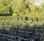Living Walls Nursery / Our lovely Nursery in Monxton