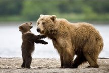 The Cutest Animals  / Cute pictures of animals making their way in this scary, beautiful world of ours...