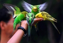Fly Birds Fly / Birds (class Aves) are feathered, winged, bipedal, endothermic (warm-blooded), egg-laying, vertebrate animals.