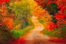 A Road Less Traveled  / A road is a thoroughfare, route, or way on land between two places, which typically has been paved or otherwise improved to allow travel by some conveyance, including a horse, cart, or motor vehicle