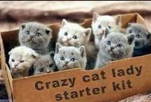 ****Cats & Kittens GROUP/COMMUNITY BOARD**** / Cats are valued by humans for companionship and ability to hunt vermin and household pests. They are primarily nocturnal.