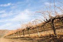 Lugares favoritos de vinos - Favorite Places for wine / Nuestro objetivo de promover todo lo relacionado los vinos mexicanos y las vinicolas de Mexico