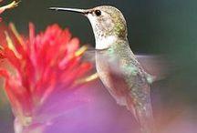 Hummingbirds / by Jo Boyer