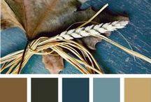 colors & beauty