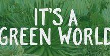 It's a Green World / Succulent friends.