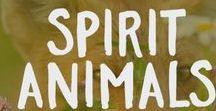 Spirit Animals / Our favorite creatures.