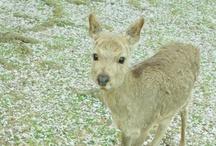 Hello, my deer / by Elena On Aerial