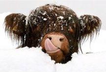 Winterzauber Schottland / Schnee statt Regen! Auf geht's ins winterliche Schottland