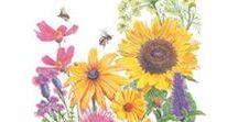 PNW Pollinator Plants