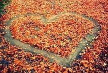 autumn / by Liz Tanner