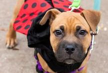 Howl-o-ween / Costumes, treats, and tips to help your pet have a happy Halloween!