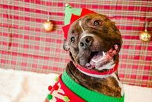 Happy Holidays for Animals / Learn how to keep pets safe and help animals during Thanksgiving, Christmas, and Hannukahh with tips, tricks, and treats!
