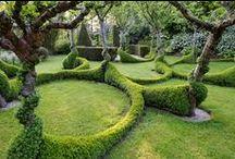 Gardening,Lavander,Flowers,Green / plants,trees,cacti,garden
