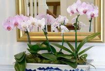 Floral / by Cheryl Jones