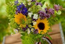 Our Farm Flowers!