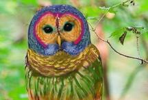 Owls!! / by Brittanie Gill