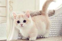 iCats ♡ / Cats, cats, cats.