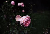 Beautiful | Flora & Fauna