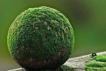 Beautiful | Moss