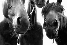 Horses / by Kathleen Michailuk