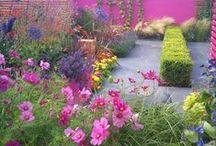 Garden design / by Georgie G
