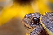 Herptiles / by Tammy Cohen
