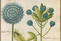 Botanicals / by Georgie G