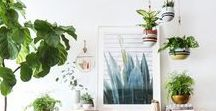 Decorating with Plants / Plants add texture, color, shape and life to a room. They are versatile design elements that can be used as a major feature of the room, a last minute styling detail, and so much more.