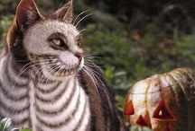 Halloween / Fall / by Heather