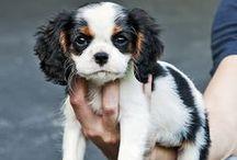Darling / Babies, & cute puppies  / by Julie Graham