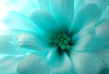 December 2012 - Champagne & Tiffany Blue  / Each month here at Marc Friedland Inc, we celebrate with a color! This month December is brought to you by Champagne & Tiffany Blue