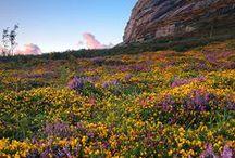Beautiful British Blooms / Beautiful British Blooms