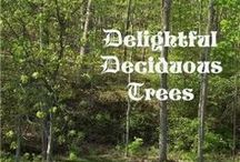 NE - Delightful Deciduous Trees / These would make wonderful additions to the NaturExplorers Delightful Deciduous Trees study!