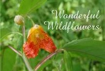 NE - Wonderful Wildflowers / Here some additional ideas to go along with the NaturExplorers Wonderful Wildflowers study!