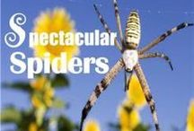 NE - Spectacular Spiders / Check out these fun ideas to go along with the NaturExplorers Spectacular Spiders study!