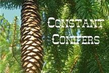 NE - Constant Conifers / These are great ideas to enhance the NaturExplorers Constant Conifers study!