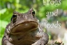 NE - Frogs and Toads