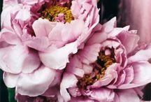 Entertain Me:: Flora / Great flower arrangements and photos.